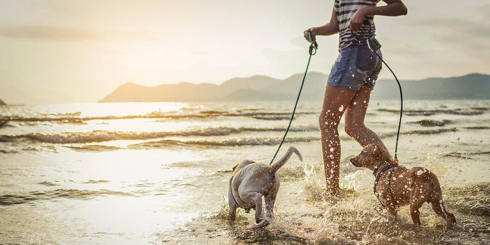 Istrien Urlaub mit HHund Tipps