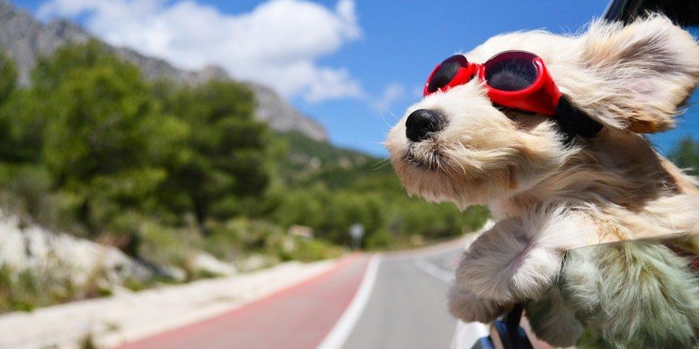 Istrien Urlaub mit Hund