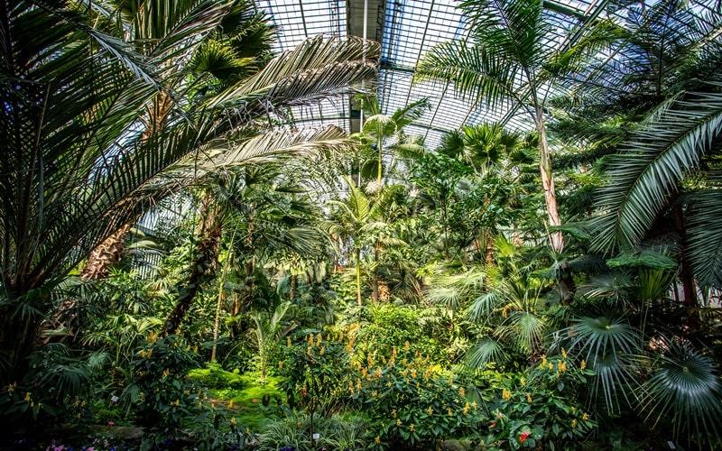 Palmengarten Frankfurt (1)