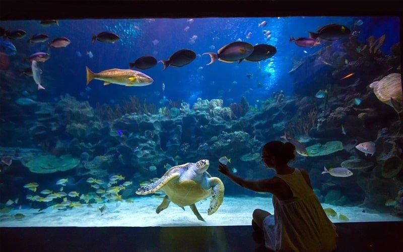 Aquarium Palma (1)