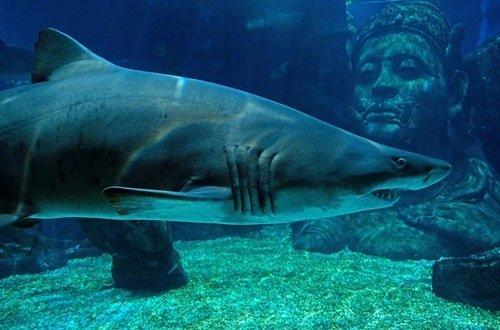 Aquarium Palma (2)