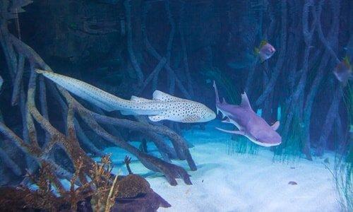 Aquarium Loro Park