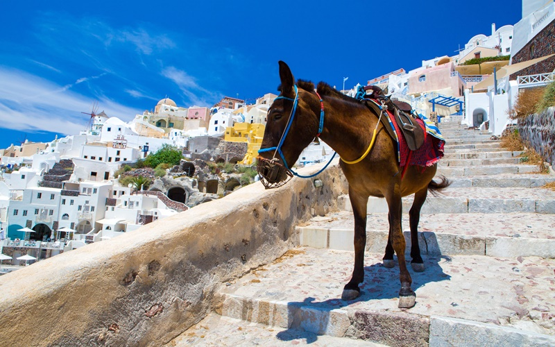 Fira Donkey Santorini