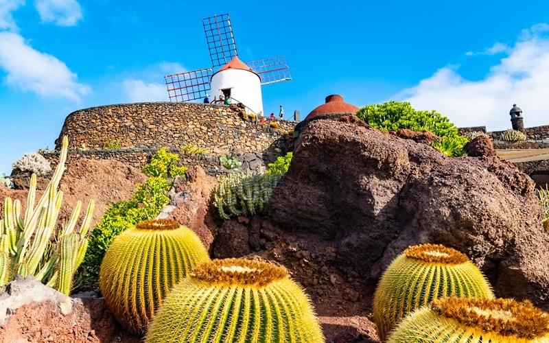 Lanzarote Klima Kakteen
