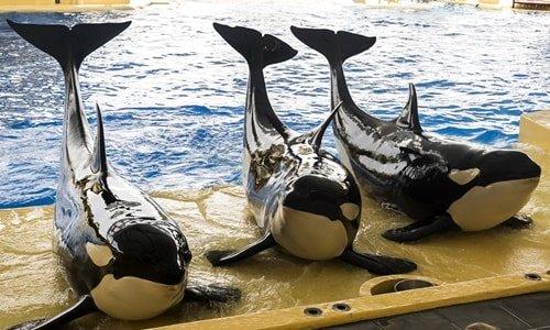 Orca Loro Park