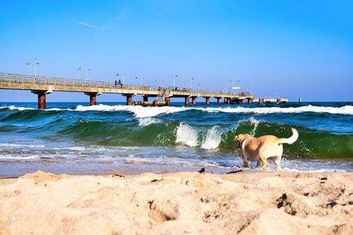 Silvester Ostsee mit Hund
