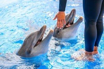Aqualand Costa Adeje Delphinshow