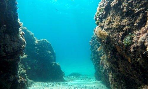 Atlantische Unterwasserwelt
