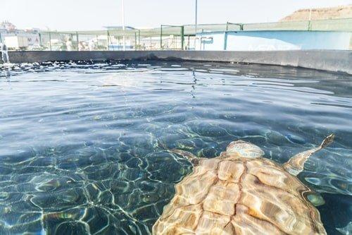 Schildkrötenaufzuchtstation Morro Jable