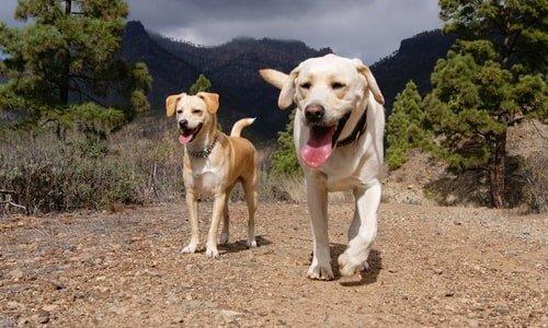 Gran canaria Hund Wandern