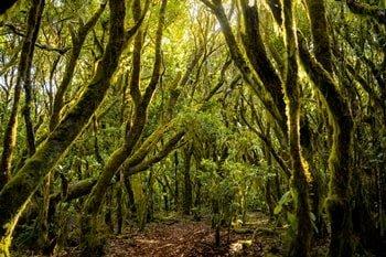 La Gomera Nationalpark Garajonay Märchenwald